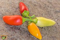santa-fe-grande-pepper-19 septembre 2018-4.jpg