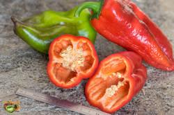 2018 Tomatofifou Poivrons et piments