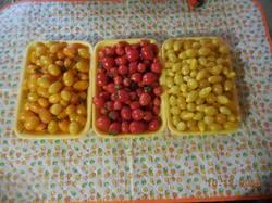 Черри Оранжевый Финик, Гераниум Кисс и Желтый Многоцветковый