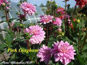 Pink Gingham 2.jpg
