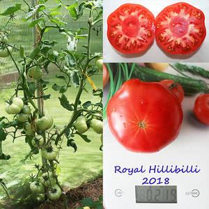 Royal Hillibilli.jpg