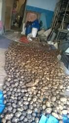 Картошечка в гараже