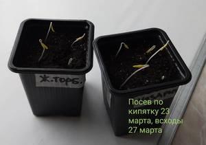 20190327_181337.jpg