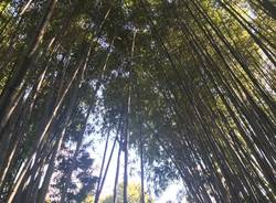 бамбуковый грот
