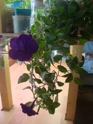 Первый цветок 18.03.19