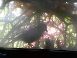 сойка на гнезде