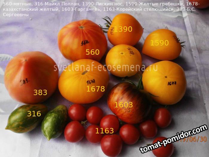 томаты-30-06-19