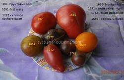 томаты 13-06-19