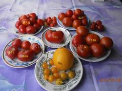 томаты 8-06-19