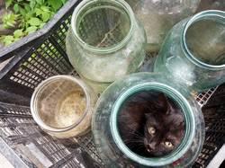 2019-06-21_15-01-46_032 Котёнок спрятался от другого