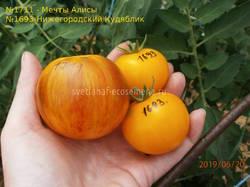 томаты-20-06-19
