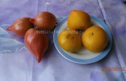 томаты-25-06-19
