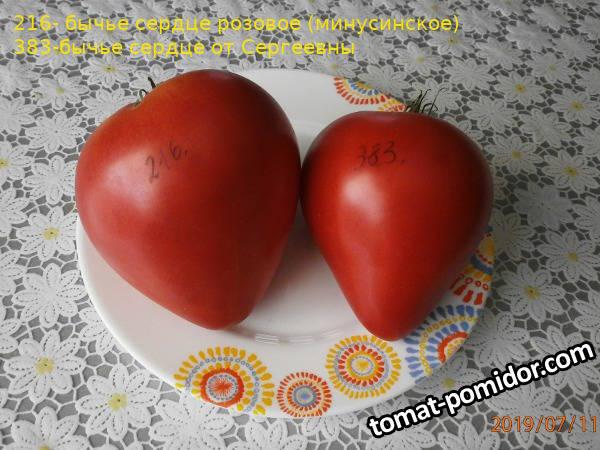 томаты-216-383