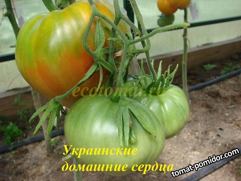 Украинские домашние сердца.JPG