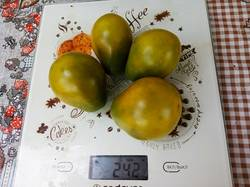 2019-08-24_09-29-15_723  Žalia kriaušė pomidorų (Зелёная груша)