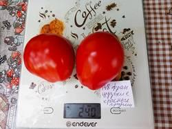 2019-08-24_09-31-50_892 ФРАНЦУЗСКИЕ КРАСНЫЕ ГРУШИ (Red Pear Franchi)
