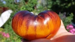 Золотое яблоко ( из ) Сен Жан де Борежара.jpg