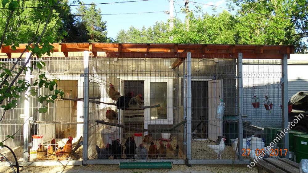 Куриный дом