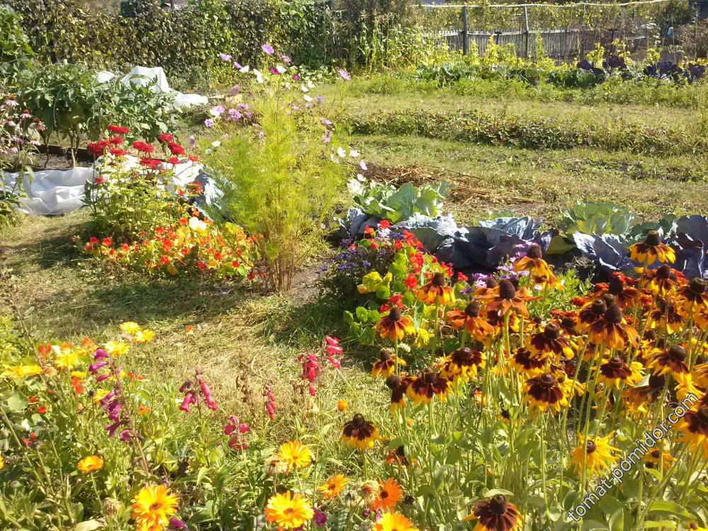 Сад в сентябре