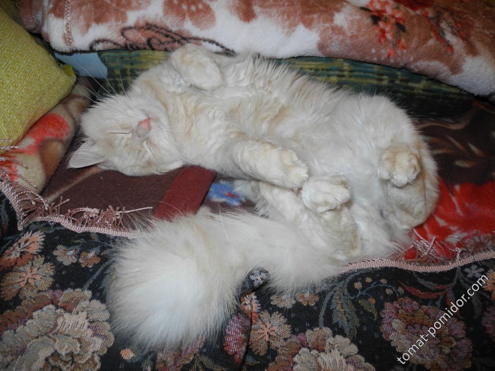 Новый котик Персик