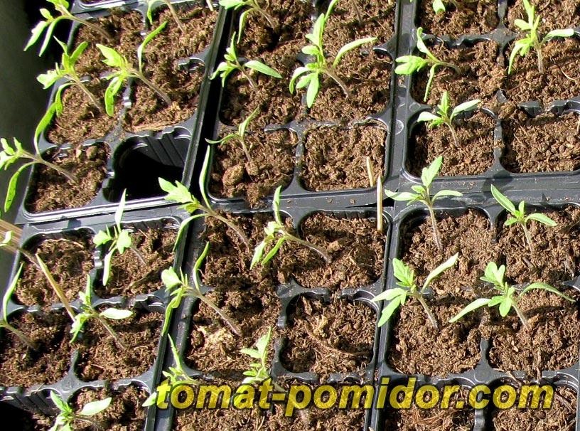 в какой земле лучше растут помидоры нейтральной или кислой
