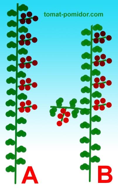 если растение формируется