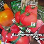 Лучшие сорта томатов. Для начинающих.