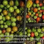 Икра из зеленых помидор… или из помидоров?