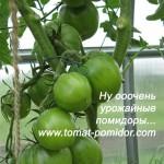 Урожайность томатов, в теплице и на воле