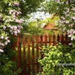 Пейзажная живая изгородь как украшение сада