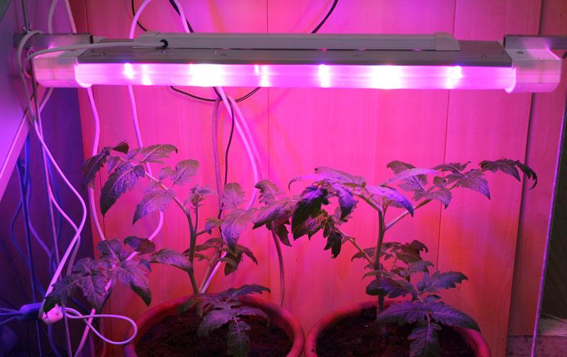 Светодиодная подсветка для растений своим руками