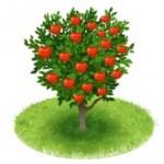 Яблони из семечек выросли самосевом