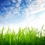 Что весной делать с газоном?..