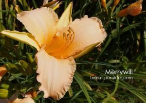 lilejnik-merrywill
