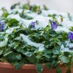 Готовим цветники к зиме