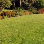 Осенний уход за газоном
