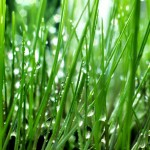 Подзимний посев газона