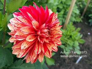 autumn-fairy