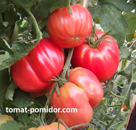 Как сделать соус для макарон из томатной пасты 171