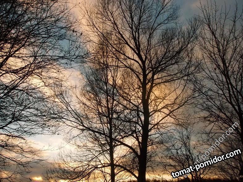 Старые деревья на участке