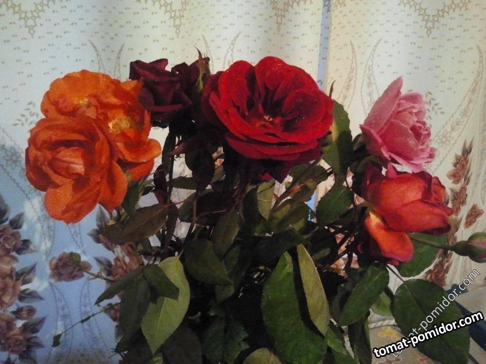 Последние розы в 2013 году