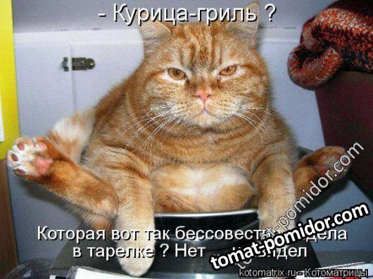 кот...
