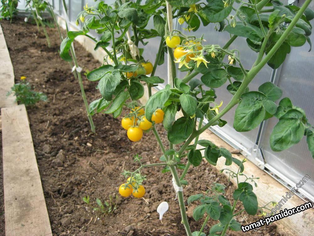 садовая жемчужина