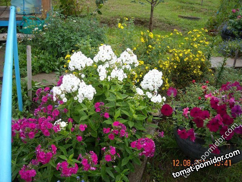 цветём и пахнем