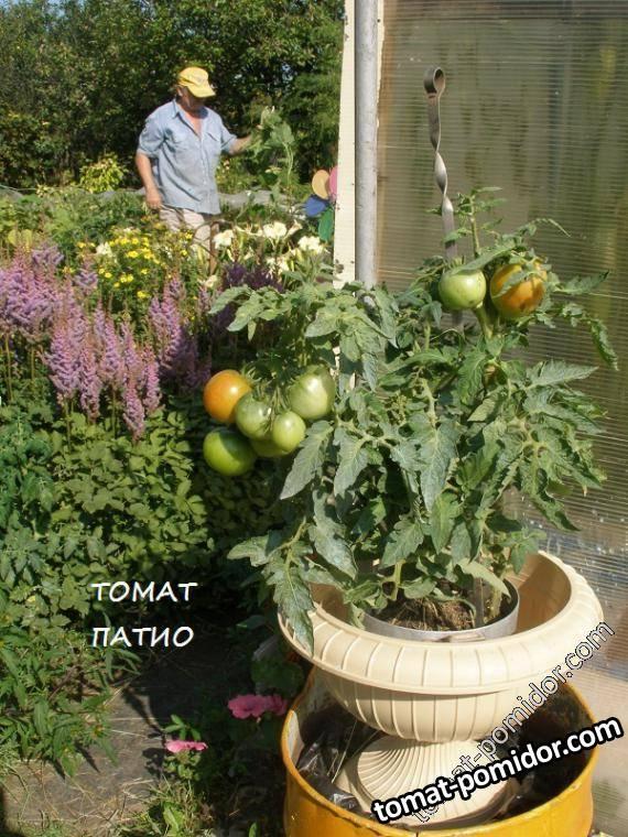 """томат""""Патио"""""""