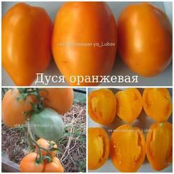 Дуся оранжевая.jpg
