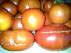 наша гордость-помидоры