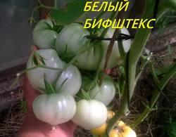 БИФ. БЕЛЫЙ