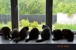 Кошачья столовая
