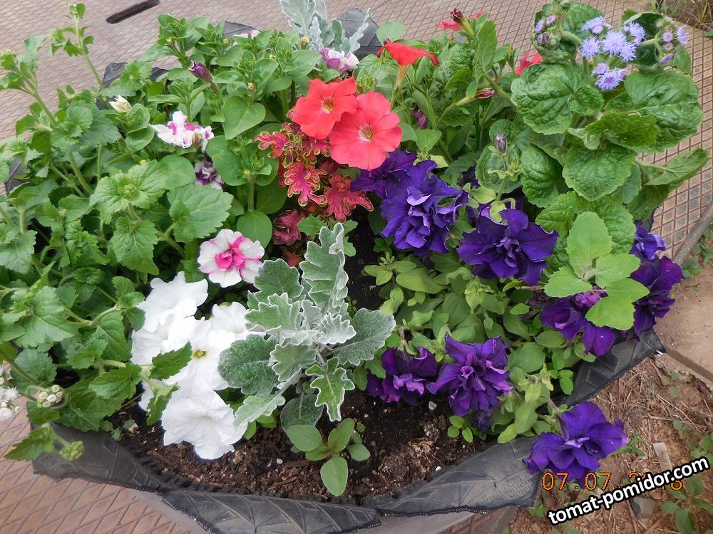 Цве�� в вазона�